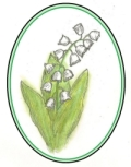 muguet lily of valley