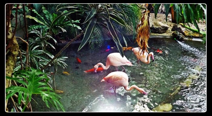 flamingo, phoenix parc, nice, france