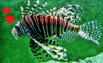 fish rabbit 03.02
