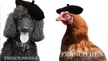 Poodle Hen