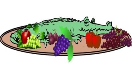 Alligator 04 feature image